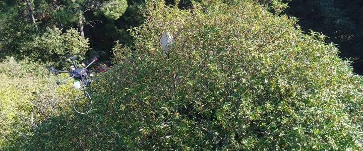 Aerocamaras impulsa el uso de drones para exterminar nidos de avispa velutina