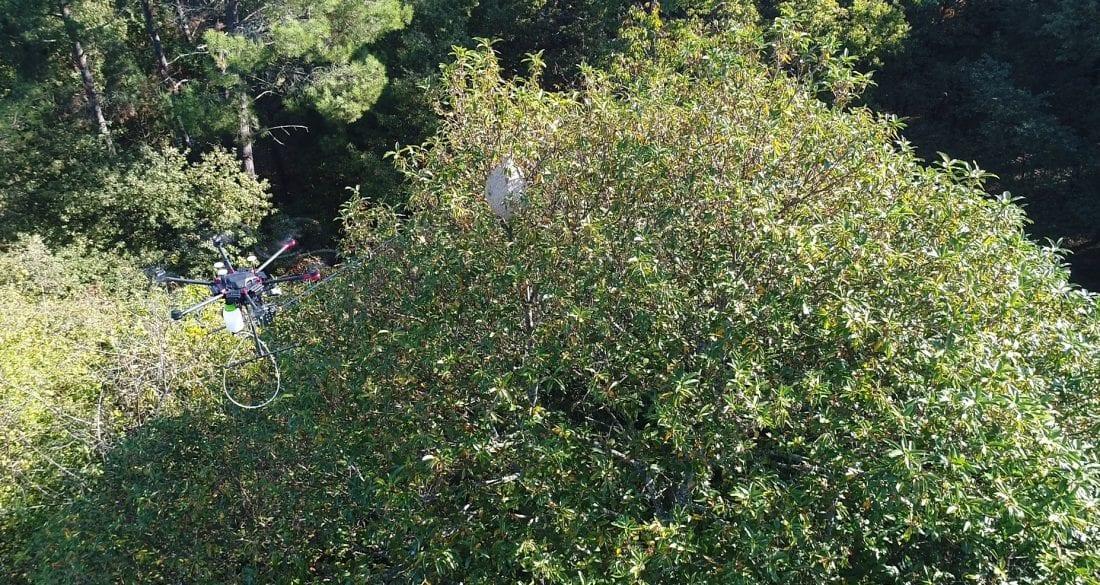 Drones contra avispa asiática