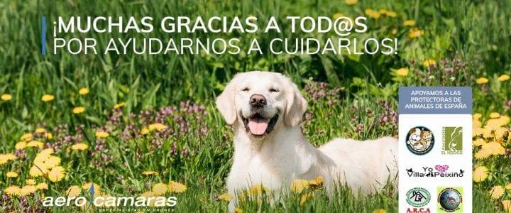 Aerocamaras apoya a las protectoras de animales de todo España